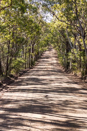 Tree lined Australian country rural dirt road surrounded by eucalyptus gum trees