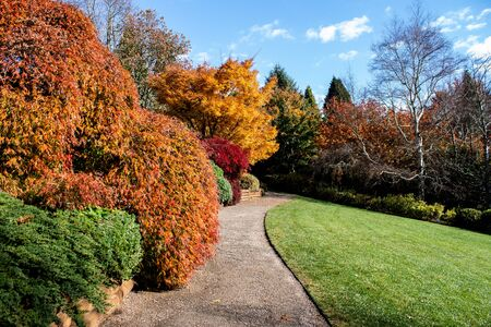 Autumn fall golden leaves in orange, yellow and red in garden setting with winding pathway around green grass