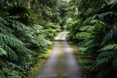 Country rural winding road surrounded by lush green ferns, trees and moss covered verge