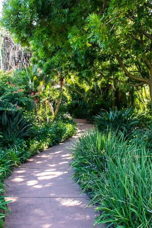 Winding walking pathway through tropical green shrub filled garden, overhanging trees Stockfoto