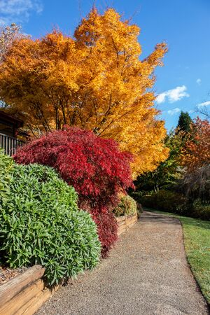 Autumn fall golden leaves in orange, yellow, red in garden setting with winding concrete pathway edged by wooden retaining wall, green grass lawn, blue sky