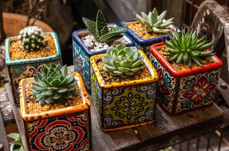 Collection of miniature succulent cactus plants in brightly coloured square pots Standard-Bild