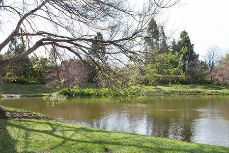 Large garden lake pond surrounded by trees and green grass