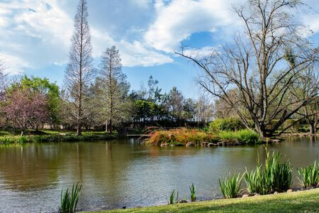 Garden lake pond with small island of plants surrounded by trees blue sky
