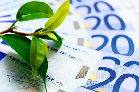 Money and plant  photo