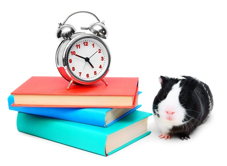 The alarm clock, guinea pig and books . photo