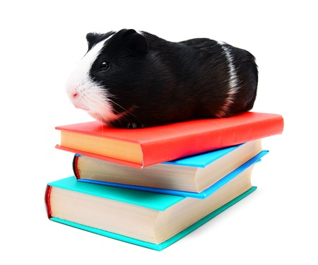 Books and the guinea pig  photo