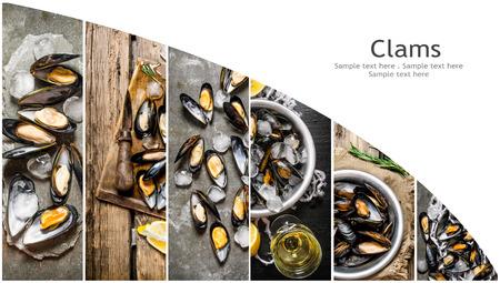 almeja: Collage de alimentos de la almeja. Foto de archivo