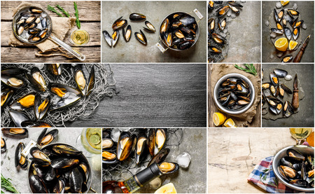 almeja: Food collage of clam .