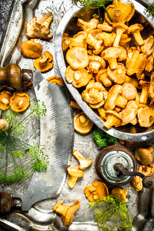 Fresh chanterelles mushrooms with herbs and an old knife on a steel tray. On a rustic background. Stock Photo