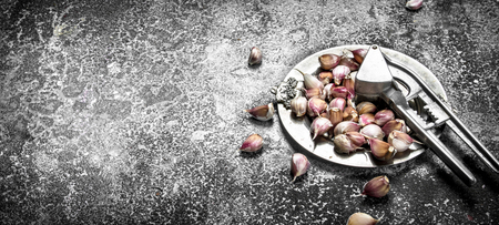 Fresh garlic on a steel tray with a press tool. On a rustic background.