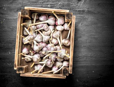 Fresh garlic in an old box. On a black chalkboard.