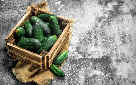 Fresh cucumbers in an old box. on a rustic background.