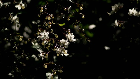 little Flowers Stock Photo