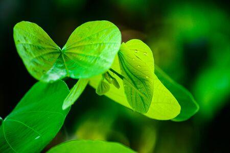 Leaf is Live