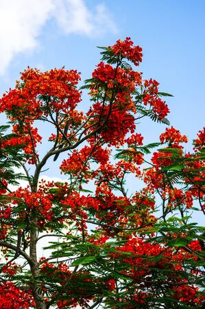 Thai Flowers Stock Photo