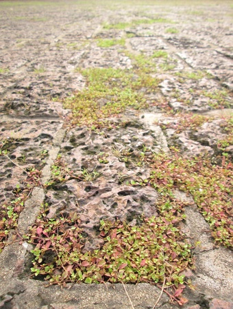 The grass on the stone pavement photo