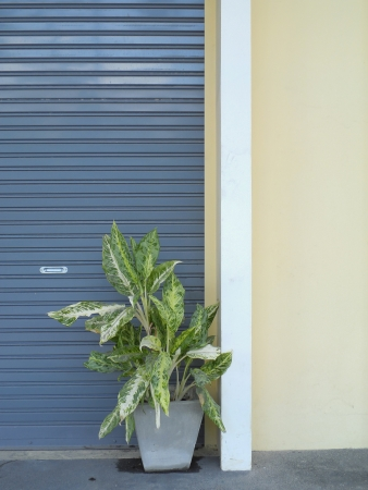 Door with potted plants photo