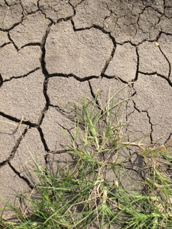 Cracked Earth and green grass  Dried Ground Texture photo