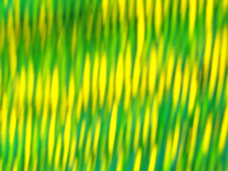 Yellow-green stripes photo