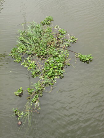 Weed, water hyacinth, water barrier to all traffic photo