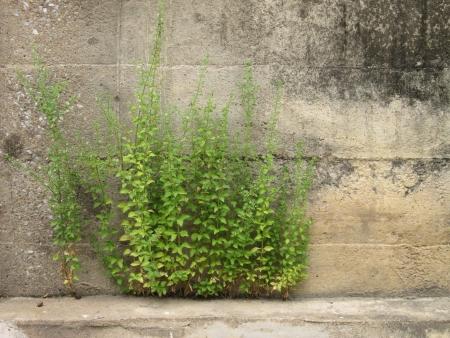 Tree wall dirty photo
