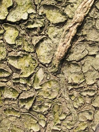 growing in dry soil photo