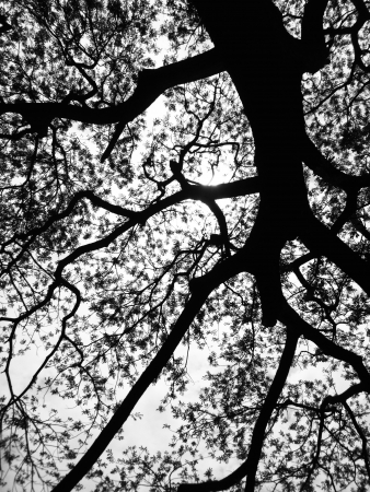 bewitched: Silhouette tree