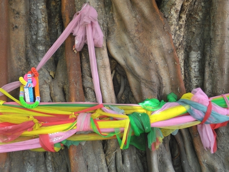 Three fabric color wrap the old tree, the belief in thailand photo