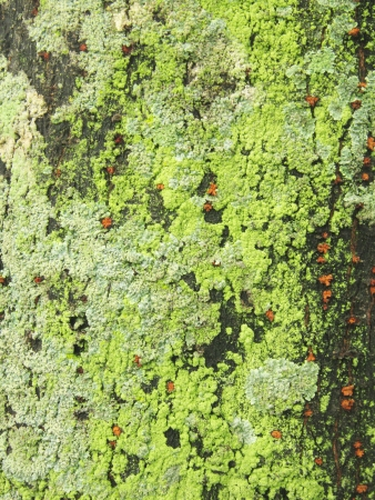 Moss on the old trunk