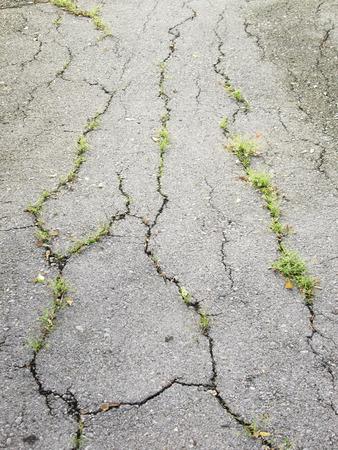 sidewalks: Trees on the cracks in the road