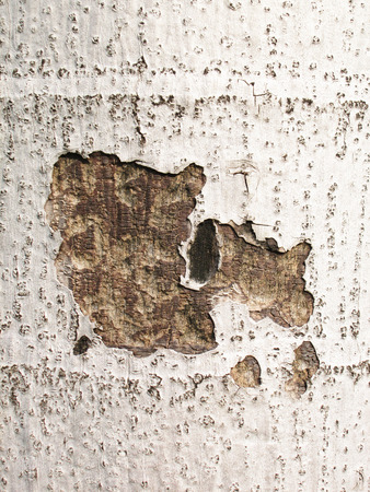 Bark cracking photo