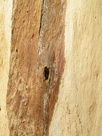 Close up of texture tree bark on old tree photo