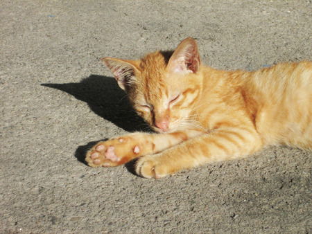 Stray cat sleeping on the pavement photo