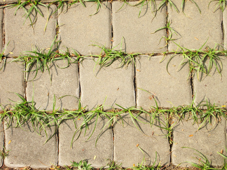 bricks floor with grass photo