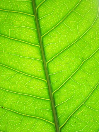 Pattern of green leaves photo