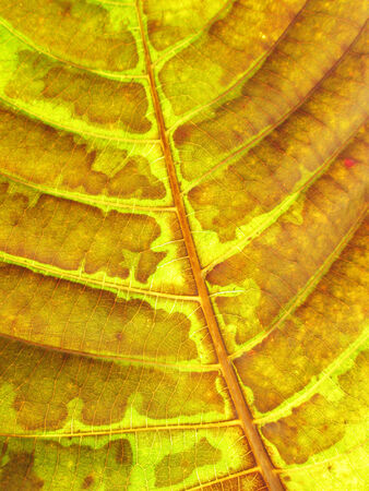 leaf texture grunge style photo