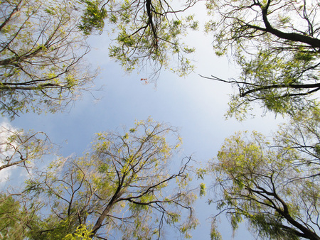 Looking up forest perspective photo