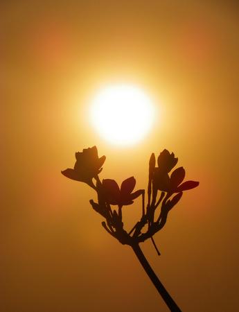 Flower silhouette against the sun photo
