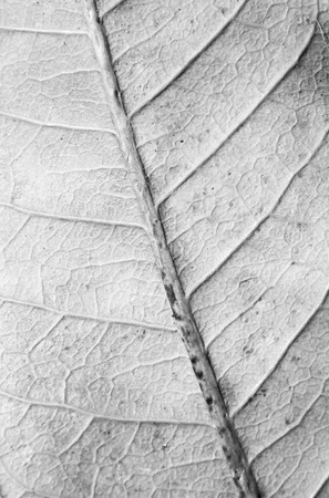Macro view on textured autumn leaf photo