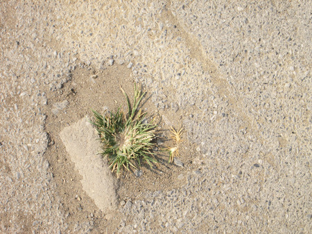 force of nature: Green grass growing from the Asphalt, broken from the force of Nature