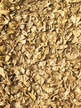 Brown fallen leaves laying on the ground photo