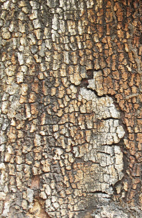 Bark is burned photo