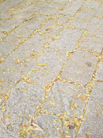 hojas secas: Seque las hojas en el camino de piedra Foto de archivo