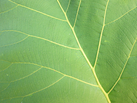 Pattern of growing leaf surface photo