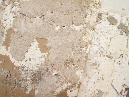 deteriorating: Termite nest on a sheet of gypsum