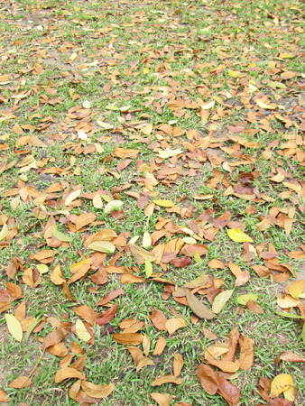 Green grass and dry leaves on ground surface texture background