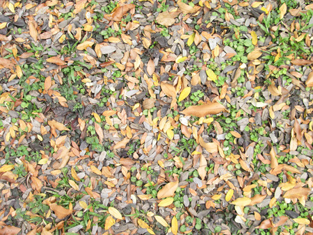 Green grass and dry leaves on ground surface texture background photo