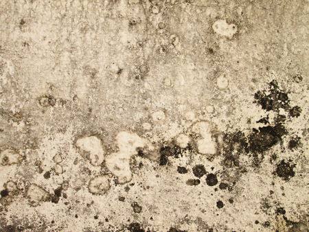 drop ceiling: Dirty, moldy walls