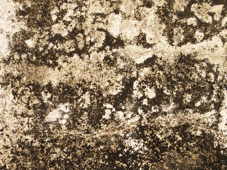 moldy: Dirty, moldy walls